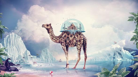 Обои Тадж-Махал под стеклянным куполом на спине у верблюда посреди ледников, коллаж от Anthony Harmon