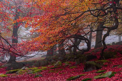 Обои Осенние деревья, Великобритания, Англия / United Kingdom, England