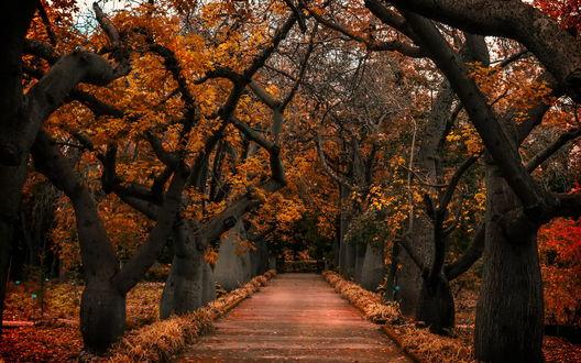 аллея из осенних деревьев загрузить