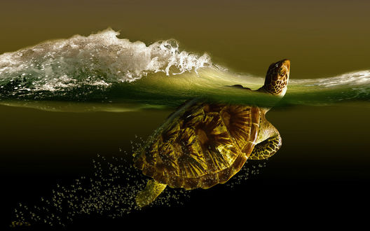 Обои Черепаха плывущая по морю