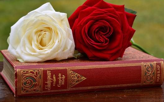 Обои Белая и красная роза лежат на книге в красном переплете, которая стоит на деревянном столе