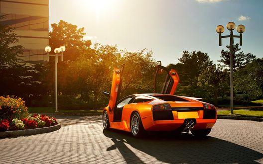 Обои Оранжевая машина марки Ламборджини / Lamborghini на фоне деревьев и неба