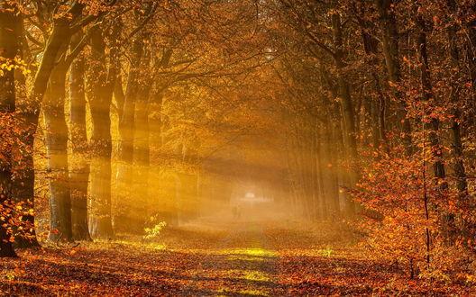 Обои Два силуэта вдалеке на широкой дороге среди осенних деревьев в легком осеннем тумане, сквозь который пробиваются солнечные лучи