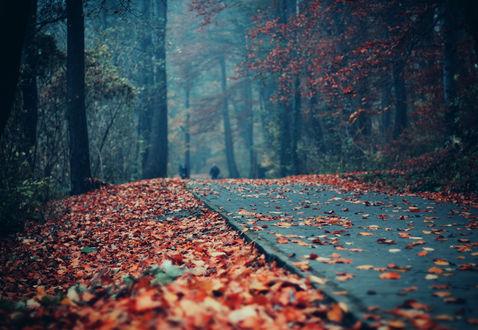 Обои Асфальтированная дорога, по которой идут люди, усыпанная красной осенней листвой