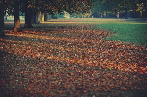 Обои Поляна усыпана осенней листвой