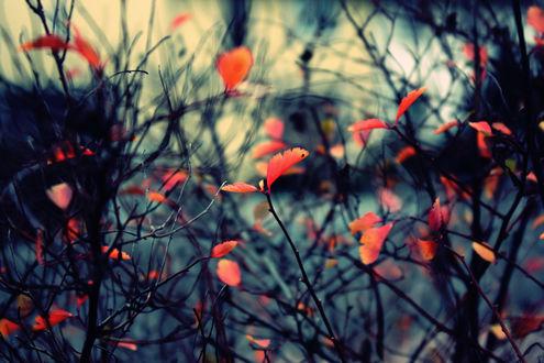 Обои Красные листья на тоненьких ветках в макросъемке