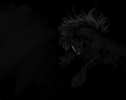 Обои Черный конь на черном фоне