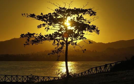 Обои Дерево на берегу реки на фоне желтого солнечного неба