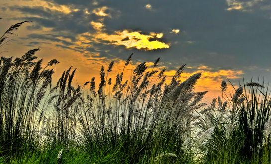 Обои Закат над растущей травой