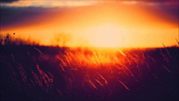 Обои Тонкие колоски травы залитые солнечным светом на закате