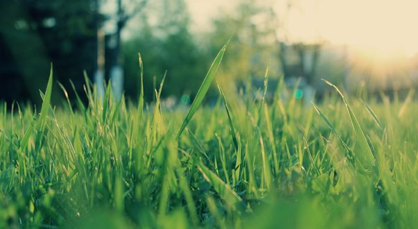 Обои Трава в солнечных бликах