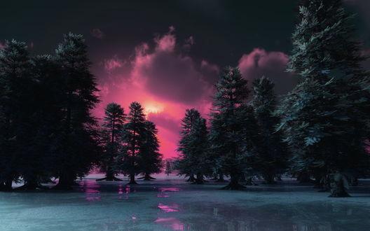 Обои Заходящее вечернее солнце осветило розовым светом облака, могучие ели, стоящие в воде и местами покрытые тонким слоем льда