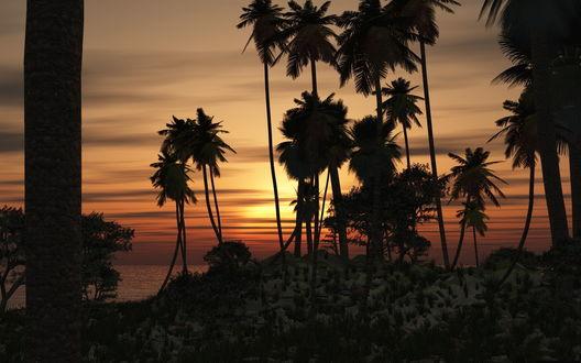Обои Пальмы, стоящие на океанском тропическом побережье на фоне сумерек и заходящего за линию горизонта солнца