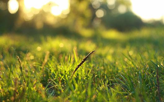 Обои Зеленая трава в солнечных бликах
