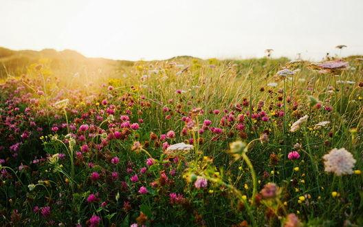 Обои Полевые травы и цветы в солнечных лучах
