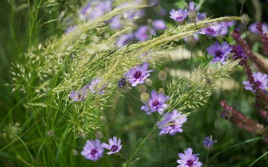 Обои Полевые цветы в зеленой траве