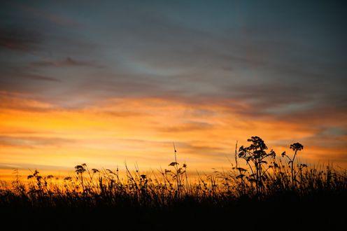 Обои Полевые травы на фоне неба на закате