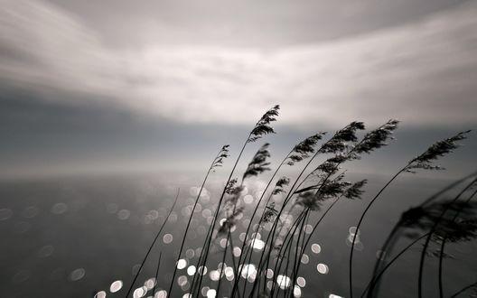 Обои Колоски травы на фоне воды и бликов света