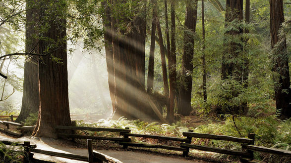 Обои Тропинка с забором в лесу