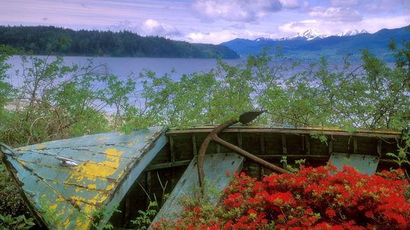 Обои Обветшалая, заброшенная деревянная лодка с металлическим якорем внутри, с выросшими на ее днище цветами красного аллиума, стоящая в кустах на берегу горного озера