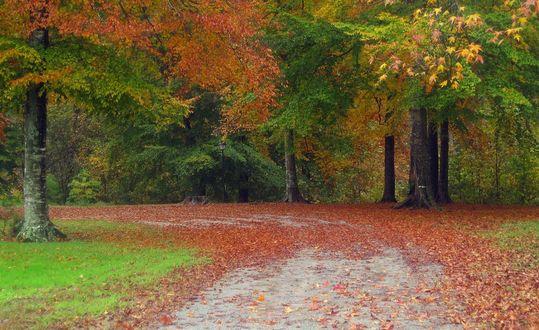 Обои Дорога усеянная осенними разноцветными листьями