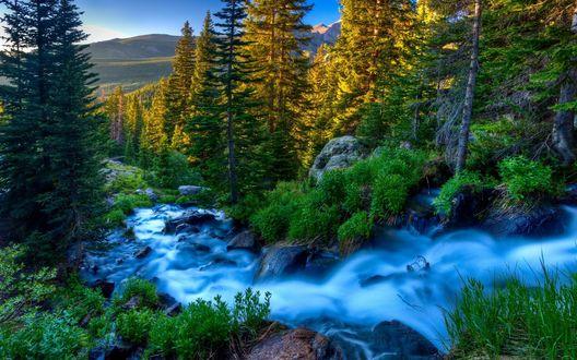 Обои Бурная речка, с синим отливом воды, протекающая по каменистому руслу горной лощины среди еловых деревьев и зеленых кустарников по берегам
