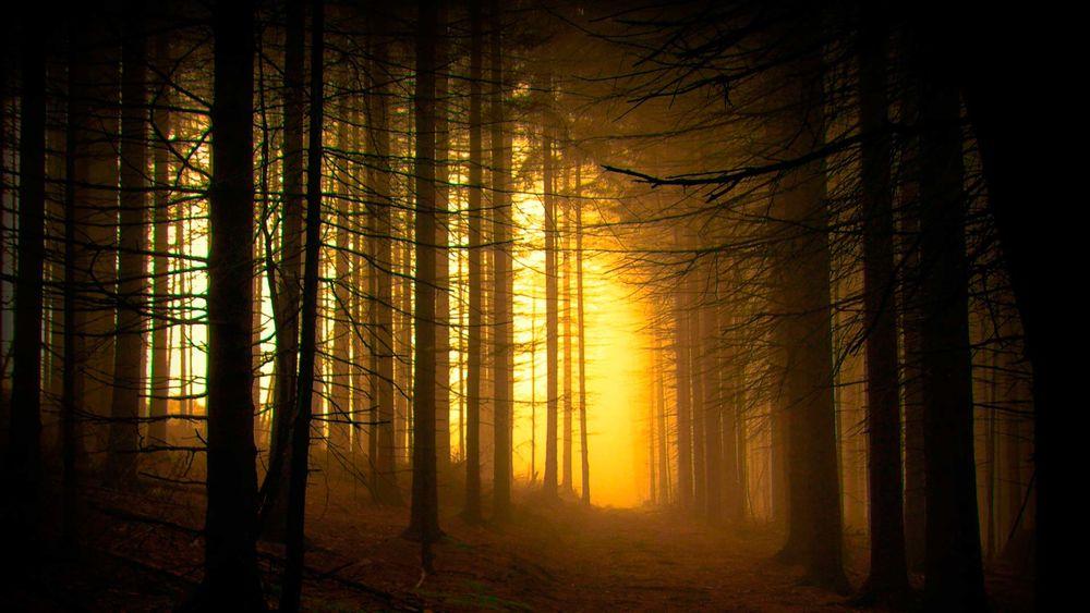 Обои для рабочего стола туманный лес