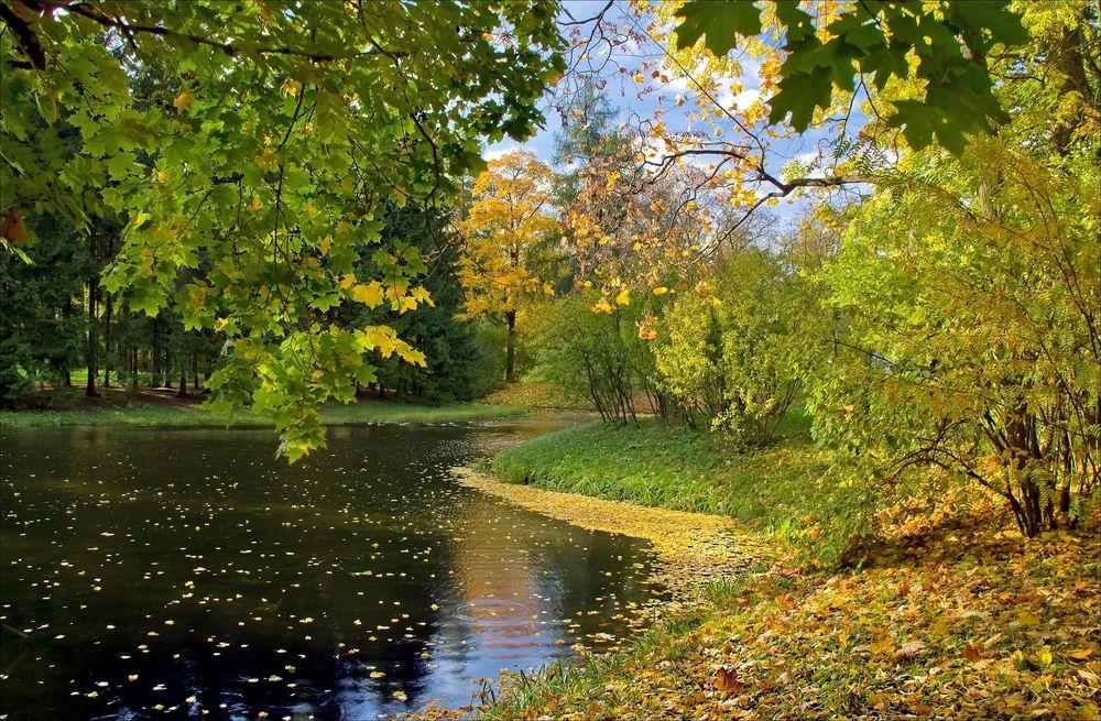 Обои Первые осенние листья, падающие с деревьев, растущих ...