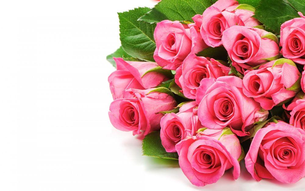 Обои чайные розы на рабочий стол