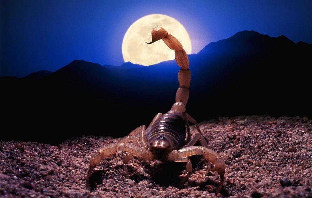 хлопать фото скорпиона на рабочий стол играет
