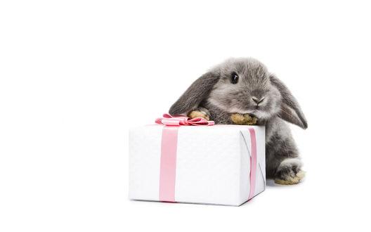 Обои Пепельный кролик с подарком