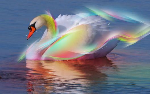 Обои Белый лебедь на пруду