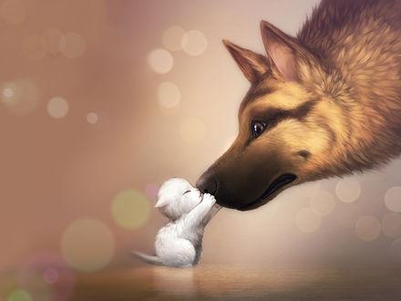 Обои Маленький белый котенок обнимает морду овчарки
