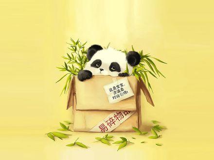 Обои Панда вылазит из коробки