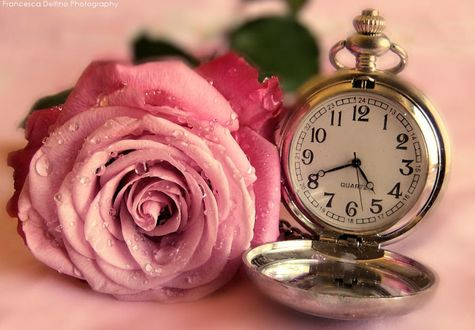 Обои Розовая роза в каплях воды и рядом открытые часы, фотограф FrancescaDelfino (QVARTZ)