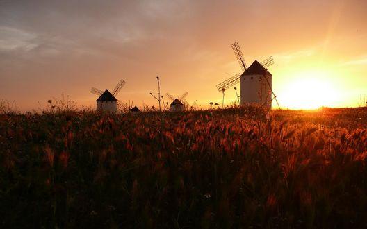 Обои Мельницы в поле на закате