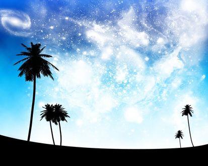 Обои Силуэты пальм на фоне абстракционного неба