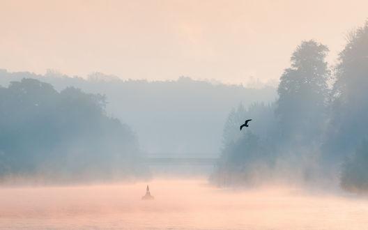 Обои Чайка летает над утренним озером с буем в центре, покрытым густым туманом, и небольшим мостом