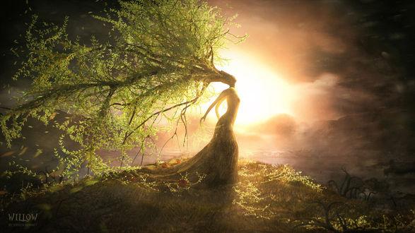 Обои Девушка - ива стоит на холме на фоне солнца (Willow / Ива by Steven Donnet)
