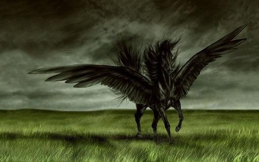 Обои Черный конь - ангел на зеленой траве