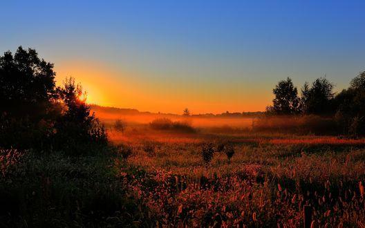 Обои Трава в поле окрашенная солнечными лучами в розовый цвет и легкий утренний туман
