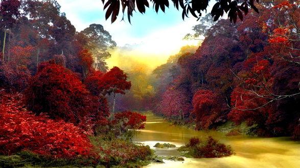 Обои Река, с желтым отливом воды, протекающая в тропических джунглях среди деревьев с багряной листвой на фоне лазурного неба с белыми облаками