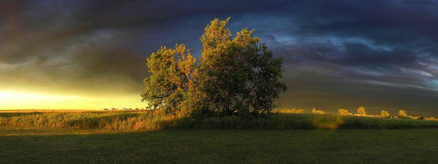Обои Пасмурное небо перед грозой над полем с деревьями