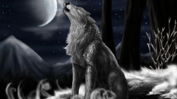 Обои Волк воет на луну на фоне гор и звездного неба