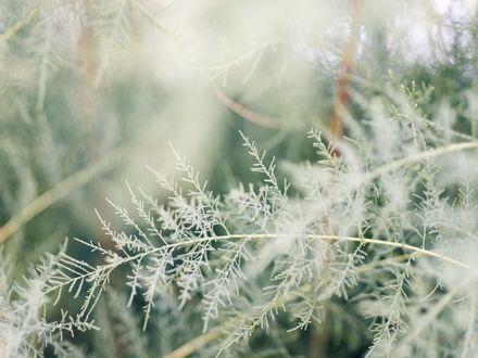 Обои Белые колоски травы крупным планом