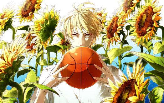 Обои Кисе / Kise держит в руках баскетбольный мяч на фоне подсолнухов из аниме Баскетбол Куроко / Kuroko No Basket