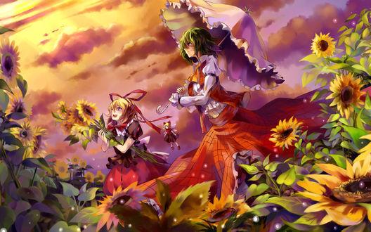 Обои Yakumo Yukari, Kazami Yuuka и Cirno среди подсолнухов любуются закатом, из игры Проект Восток / Touhou