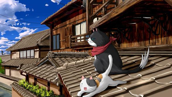 Обои Очень серьезный черный кот, в красной бандане на шее, сидит на крыше дома, наблюдая за улыбающимся котом, который лежит рядом