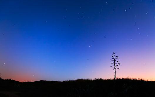 Обои Одинокое дерево стоит в траве на фоне звездного неба