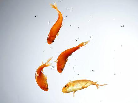 Обои Золотые рыбки под водой